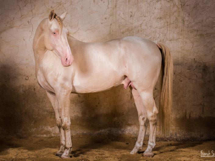 thooz-des-dieux-studio-équestre-grain-de-pixel-photographe-equestre-animalier-1