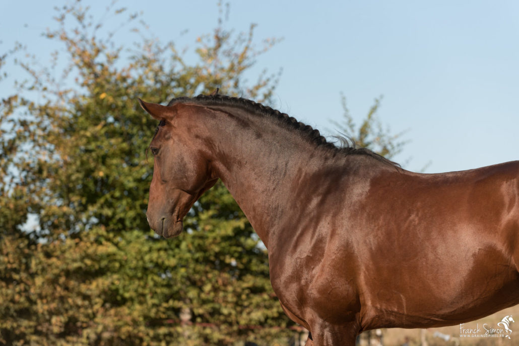 jabu-cheval-pRE-séance-photo-cavalier-franck-simon-graindepixe.fr-photographe-animalier-1-3