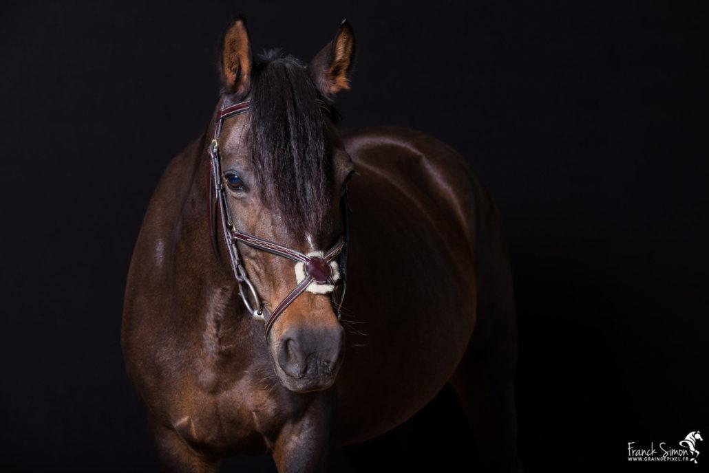 studio-equestre-grain-de-pixel-photographe-equestre-et-animalier-1-21