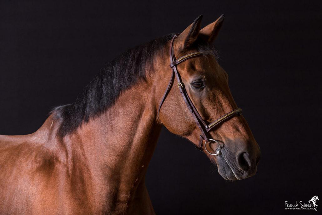 studio-equestre-grain-de-pixel-photographe-equestre-et-animalier-1-4