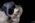 Equites-2019-studio-équestre-grain-de-pixel-90-Modifier