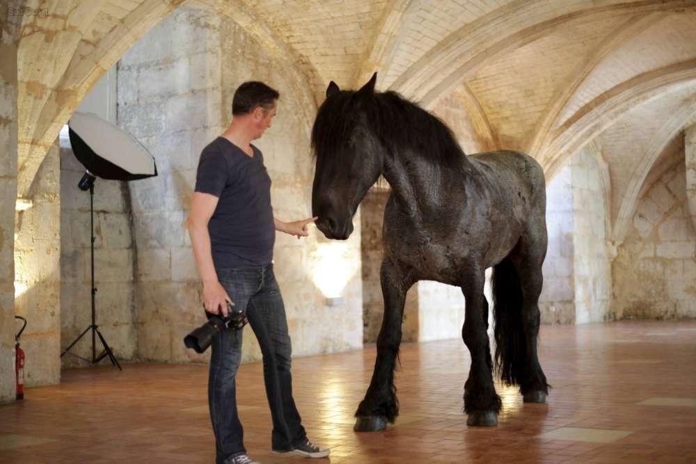 cheval photographié dans salle des gardes du chateau de françois premier