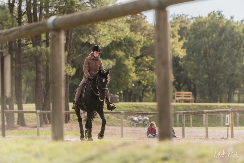 cheval-bavard-rencontres-saumur-ENE-grain de pixel -photographe equestre