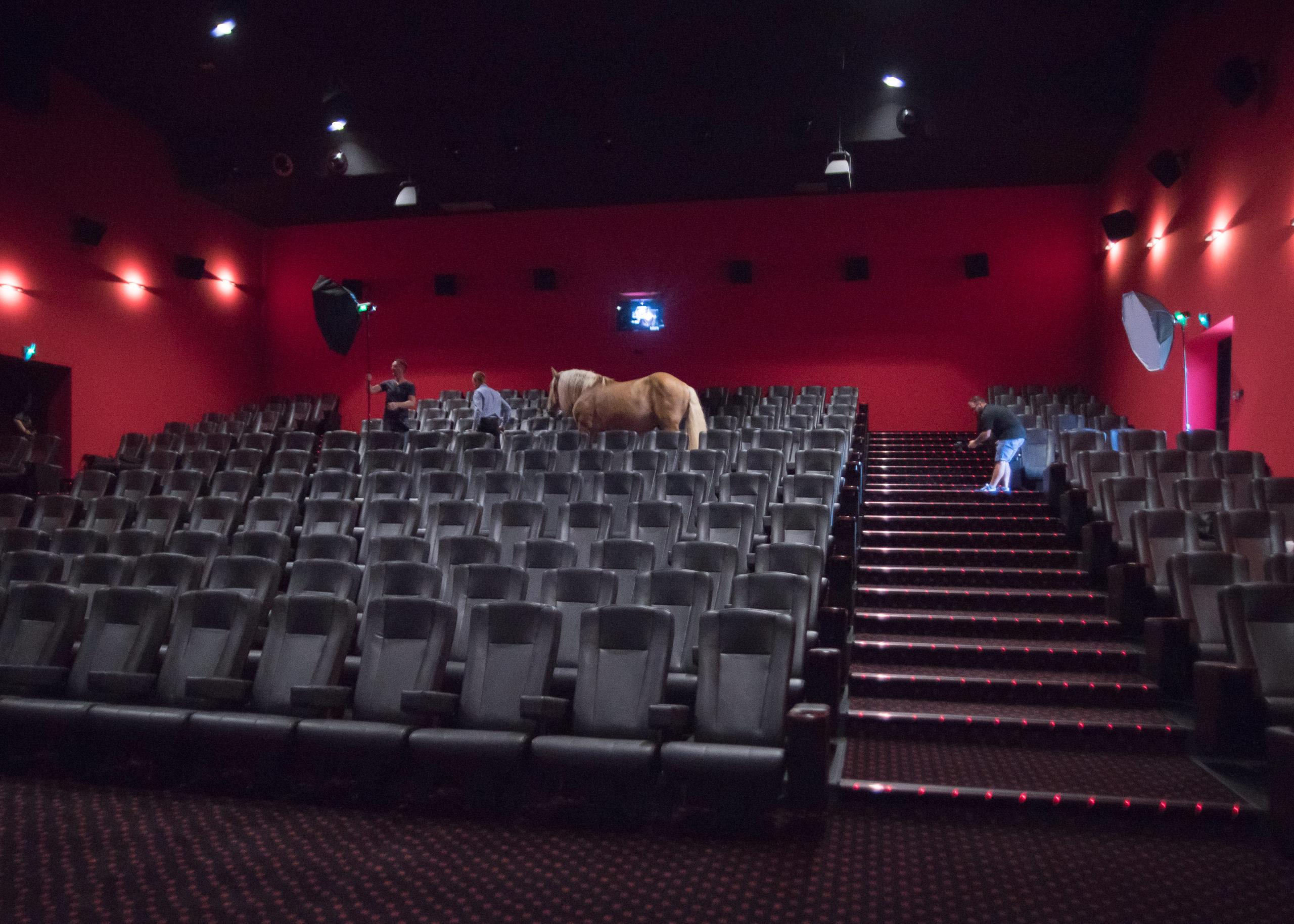 Force Tranquille : quand le cheval fait son cinéma avec un photographe