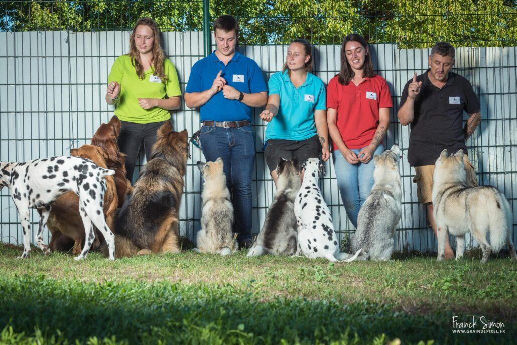 Au coeur des chiens -education canine-equipe- - Grain de Pixel, photographe animalier - chiens-chats-chevaux- en Charente-6
