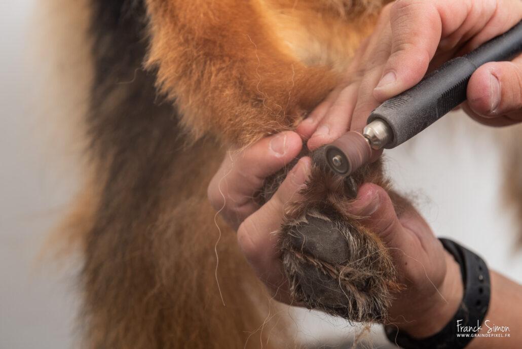au-coeur-des-chiens-toilettage-canin-franck-simon-photographe-animalier-charente