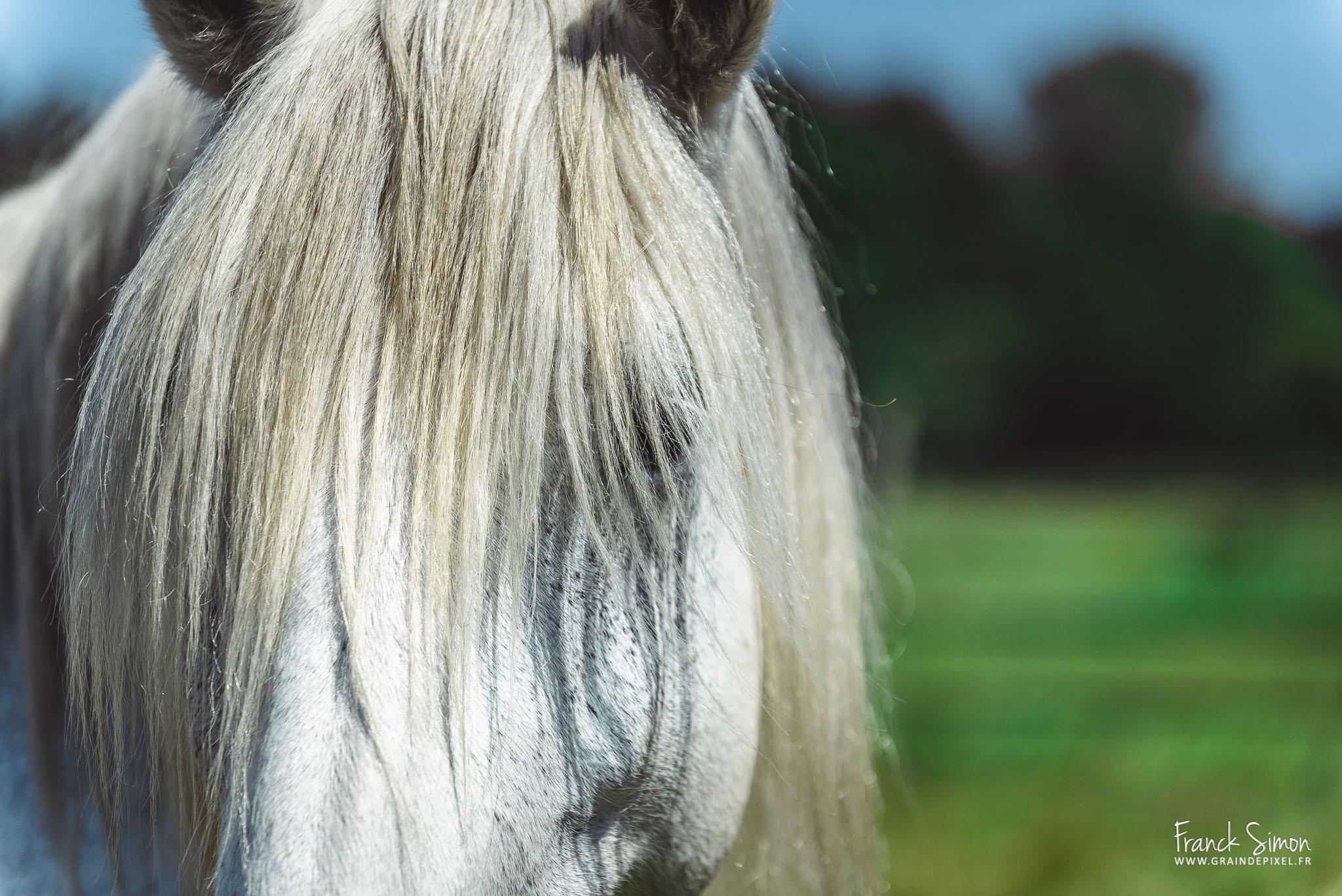 10-errerus-photographie-equestre-grain-de-pixel