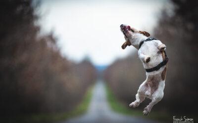 Photographie canine et équine : le sigma 105 Art 1.4 l'outil à ne pas négliger