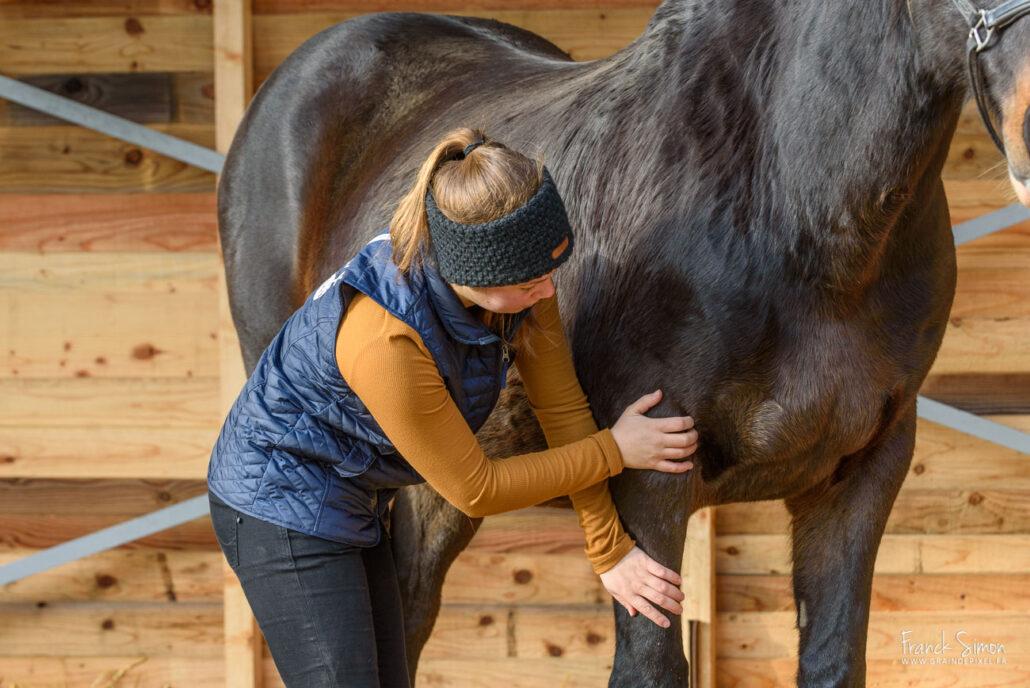 Confort des Chataigniers-grain-de-pixel-photographe-equestre-charente