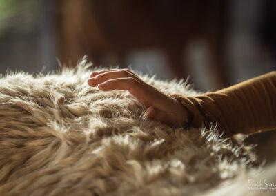 Confort des Chataigniers, le massage canin et équin