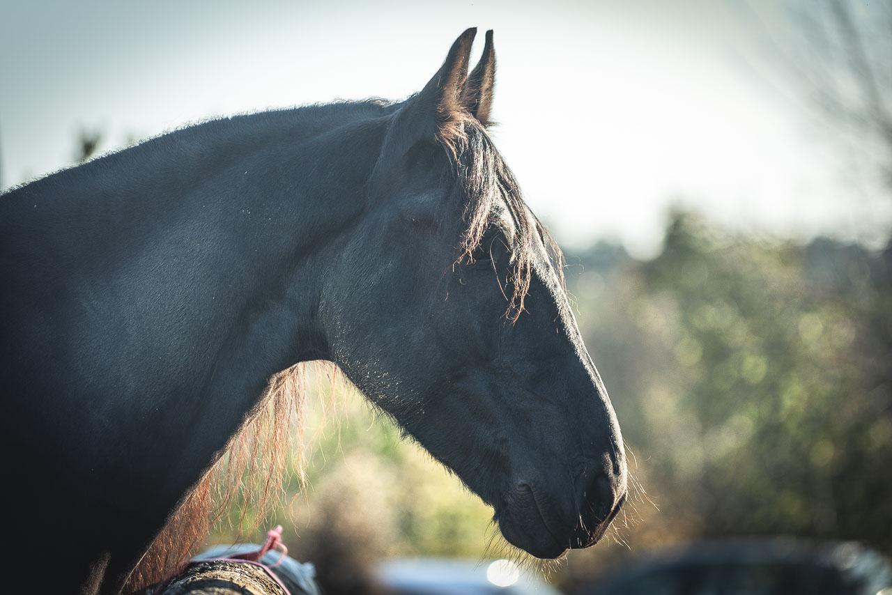 cheval-sublimé-photographe