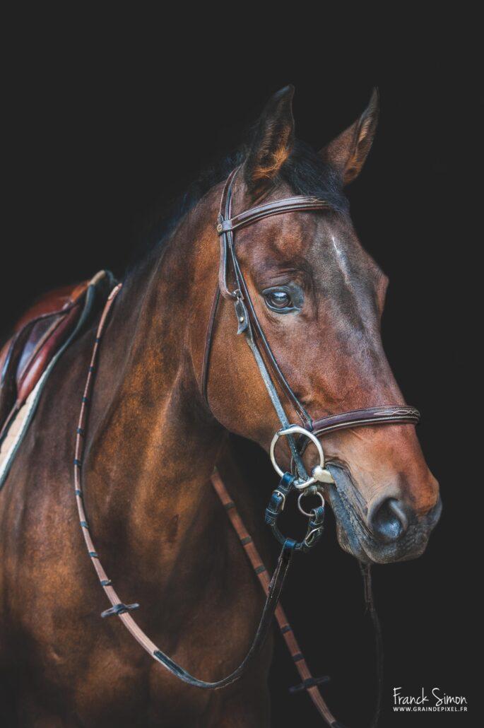 fond-noir-cheval-comment-le-reussir-grain-de-pixel