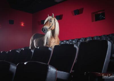 Le cheval fait son cinéma