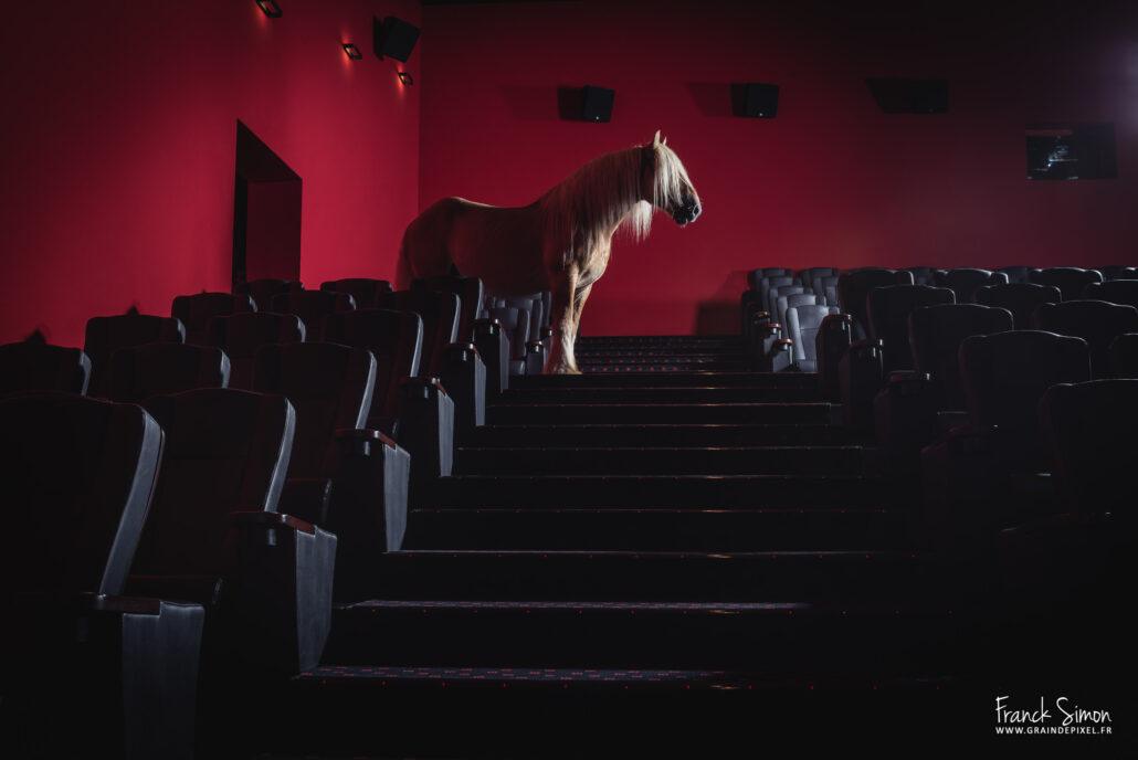 Force-Tranquille-Megarama-Garat-Franck-simon-grain-depixel-photographe-equestre-charente-