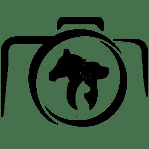 logo-grain-de-pixel-photographe équestre et animalier - charente - nouvelle aquitaine - carre-noir