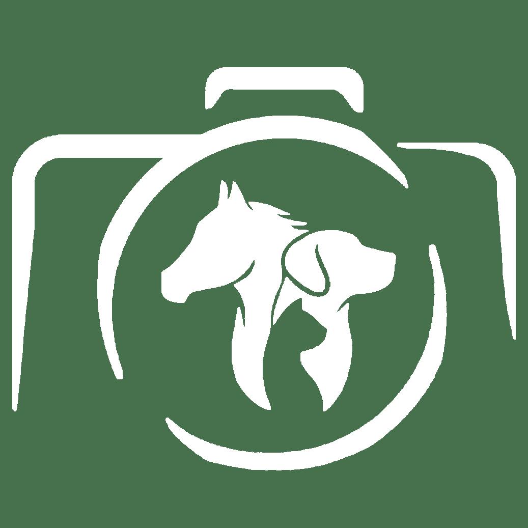 Grain de Pixel - Photographe équestre et animalier