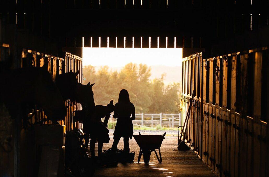 fond-noir-chevaux-barnes-