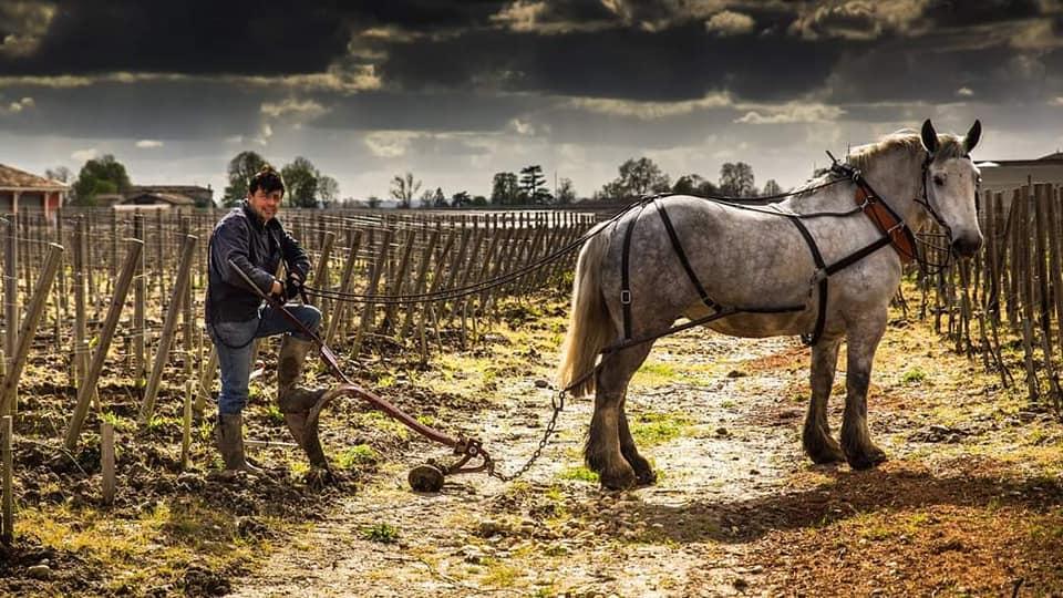 crédit photo cheval des vignes