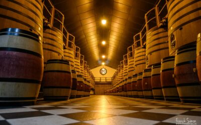 Trait de Vigne – Des Domaines viticoles d'exception
