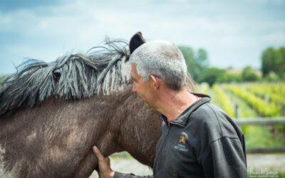 Des chevaux dans les chais des Châteaux Bordelais : du projet à la reconnaissance