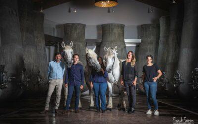 Séance photo atypique au Château Beauregard : Le Cuvier et les chevaux Percherons